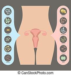 Gynecology Vector illustration. Womans vaginal flora or...