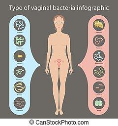 Womans vaginal flora - Gynecology Vector illustration....