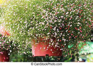 Gypsophila flowers - pink flowers in garden
