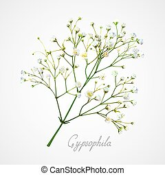 Gypsophila white flower - Branch of the gypsophila flower on...