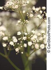 gypsophila with shallow depth of field