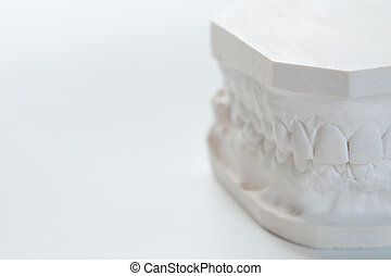 Gypsum model of human jaw on a white background.