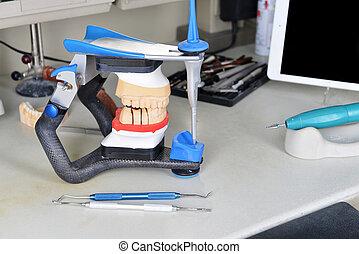 gypsum model of jaw and basic dentist tools