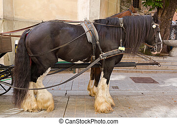 Gypsy Horse with white feather furs socks on the lower legs standing outside the building