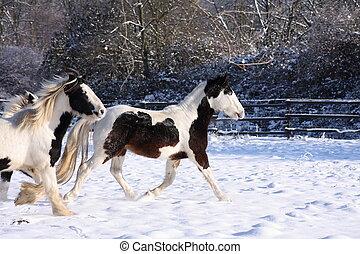 Gypsy horses in snow III