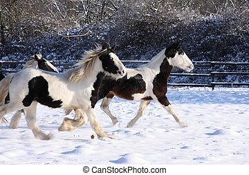 Gypsy horses in snow IV