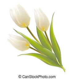 három, fehér, tulipánok, képben látható, egy, card.