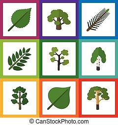 hárs, lakás, ökológia, állhatatos, elements., fa, zöld, más, is, erdő, vektor, csinos, objects., beleértve, örökzöld, ikon