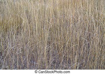 háttér, közül, száraz, magas fű