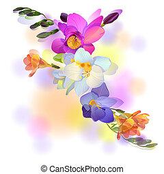 hälsningskort, med, blid, freesia, blomningen