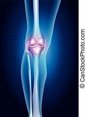 hälsosam, mänskligt ben