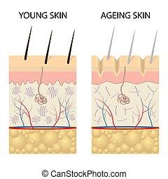 hälsosam, skinn, comparison., ung, äldre