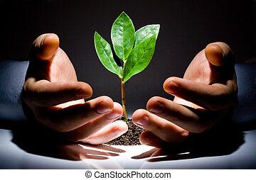 hände, mit, pflanze