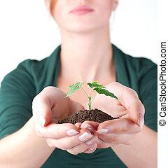 hände, von, frau, und, grün, pflanzenkeim