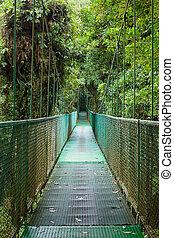 hängbro, in, mest rainforest
