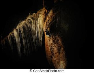 häst, ögon, in, mörk