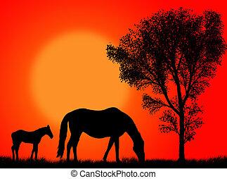 häst, beta
