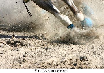 häst, fötter, tävlings-