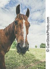 Häst, Gräs, mun