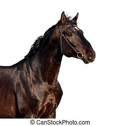 häst, huvud, isolerat, vita