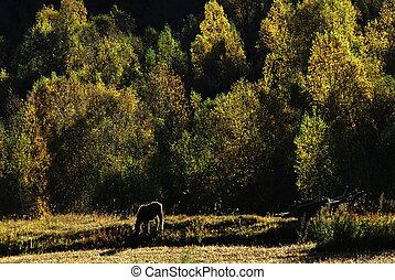 häst, in, den, skog