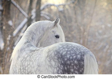 häst, in, vinter