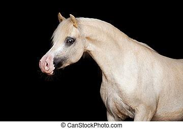 häst, isolerat, på, black.