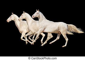 häst, isolerat, på, svart