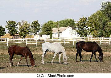 häst, lantgård