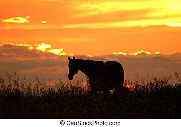 häst, silhuett