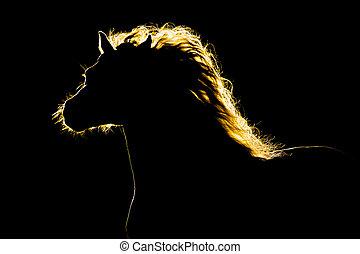 häst, silhuett, isolerat, på, svart