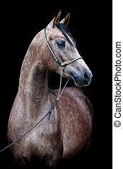 häst, svart, huvud, isolerat