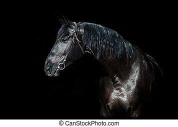 häst, svart, isolerat
