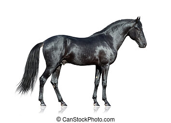 häst, svart, vit