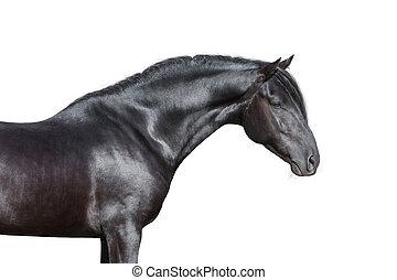 häst, svart, vit, huvud