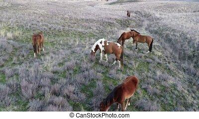 hästar, flugor, kamera, omkring, flock