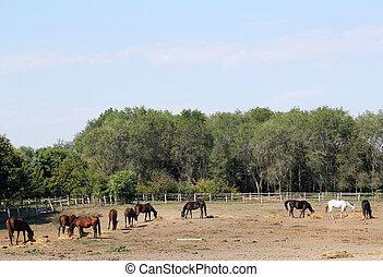 hästar, lantgård, scen