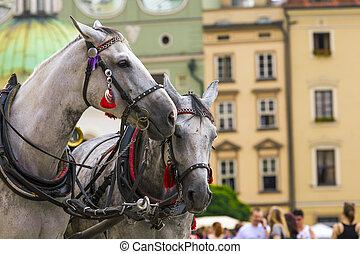 hästar, och, vagnar, på, den, marknaden, in, krakow, poland.