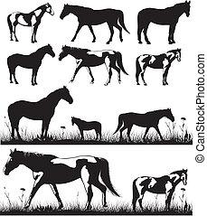 hästar, silhouettes, -