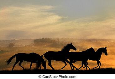 hästar, silhouettes, in, solnedgång