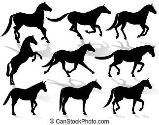 hästar, silhouettes