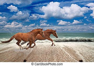 hästar, spring, havsstrand, längs