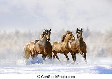 hästar, springa