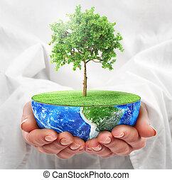 hålla, eco, concept., planet., planet, träd., räcker, räddning, halvt