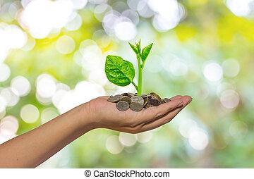 hålla lämna, träd, växande, på, gyllene, mynter, -,...