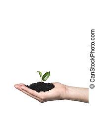hånd, hos, en, i tiltagende, plante