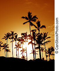 håndflade kokosnød træ, silhuetter