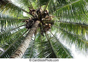 håndflade træ, baggrund