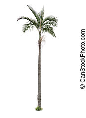 håndflade træ, isoleret, på hvide, baggrund