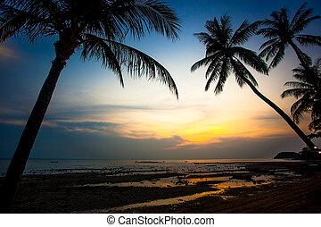 håndflade træ, solnedgang, på, samui koh, strand